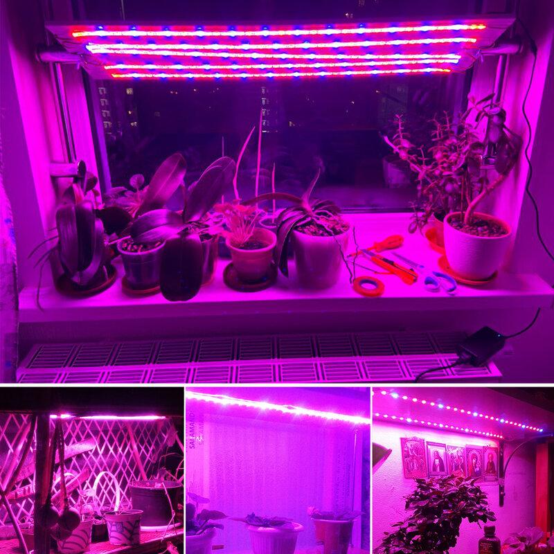 أدى النمو ضوء DC12V تزايد LED قطاع نمو النبات ضوء مجموعة محول مع والتبديل