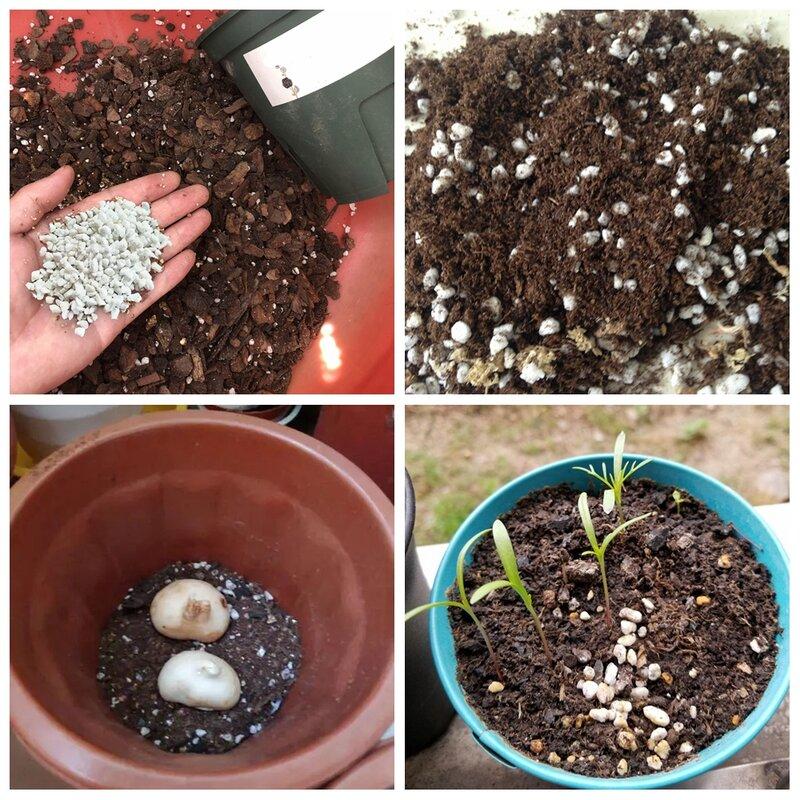 50g (0,5 L) Perlit Pellet Konfigurieren Nährstoff Boden Gärtnerei Atmungs Lose Boden substrat Für Garten Bonsai